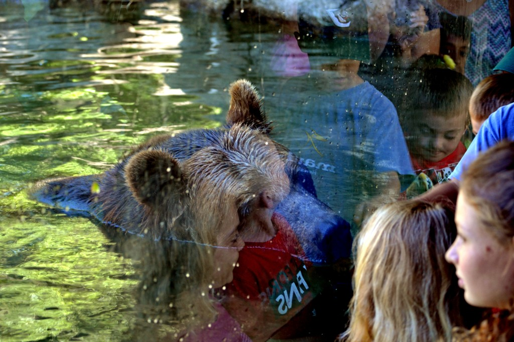 Bear and reflections of kids