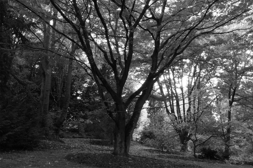 7  - DSC01192 bw resized